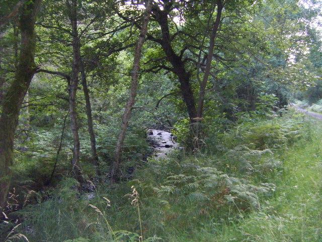 Euden Beck through the trees