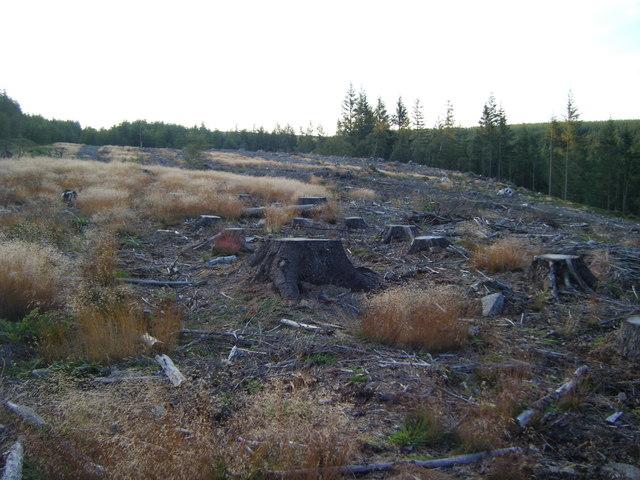 Clear-fell area,Sharnberry Flat