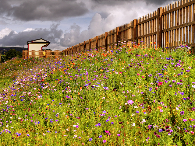 Wildflower Bank and Burrs Station (East Lancashire Railway)
