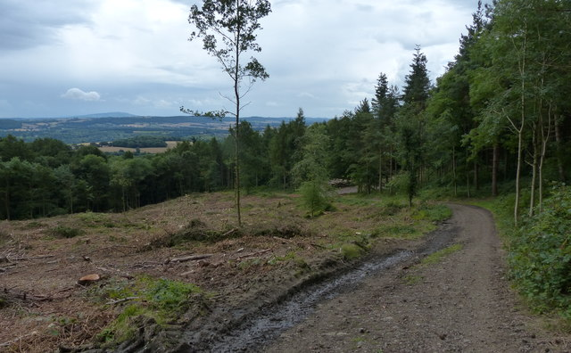 Forestry track descending the Wrekin
