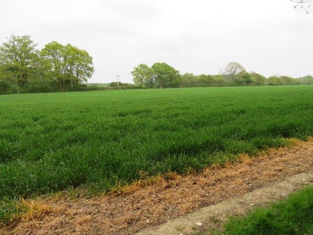 Farmland east of South Wood