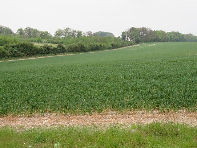 Farmland south of Basingstoke