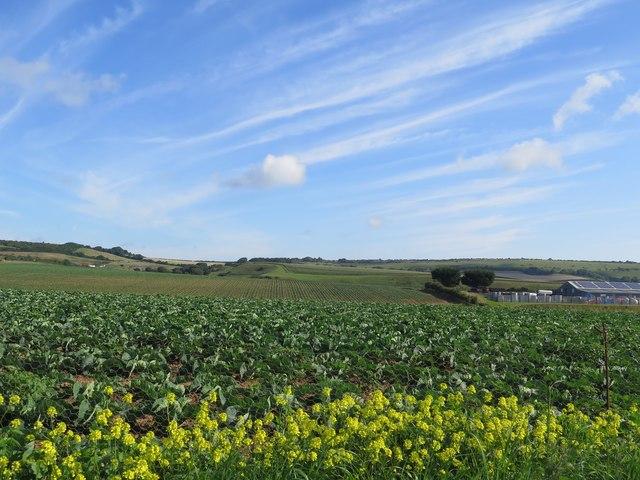 Fields at Perreton Farm, near Arreton