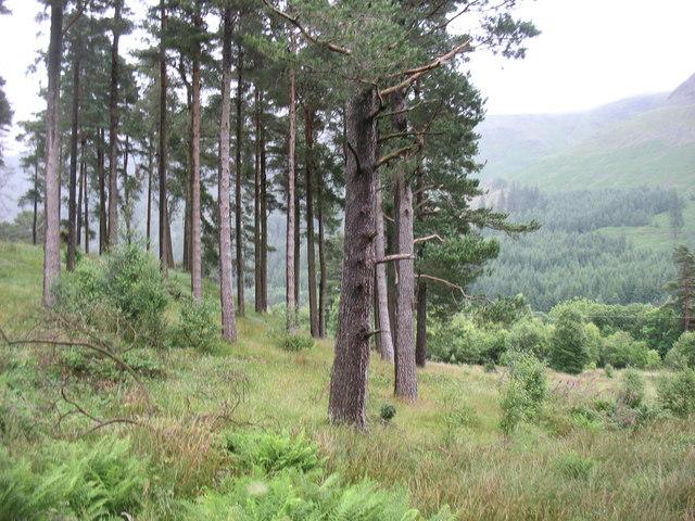 Woodland above Thirlmere