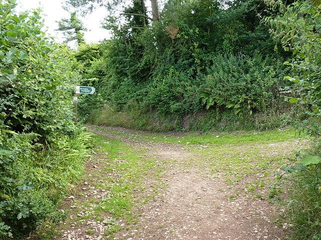 Path junction near Harecombe Farm