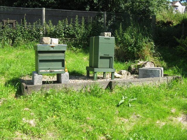 Beehives at St John's Lodge