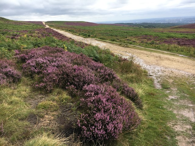 Heather in flower on the Houndkirk Road