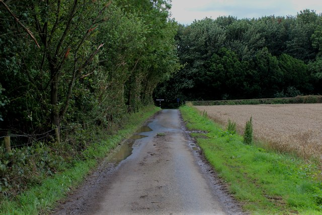 Riders Lane beside Braisthwaites Wood