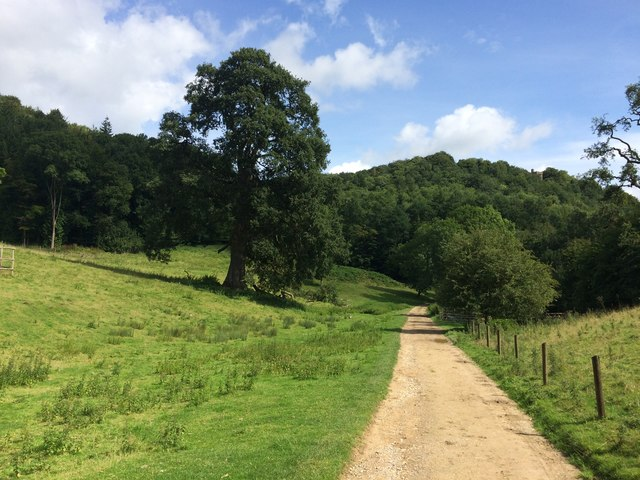 Track in Woodchester Park