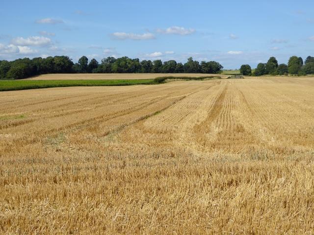 Field of stubble near High Coniscliffe