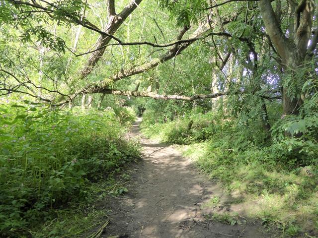 Teesdale Way near Merrybent