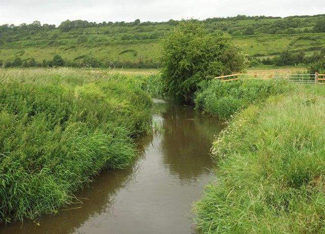 River Cary near Charlton Mackrell