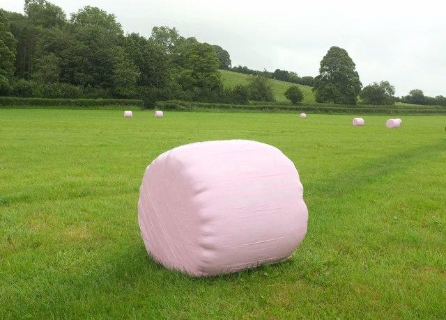 Pink bales near Charlton Mackrell