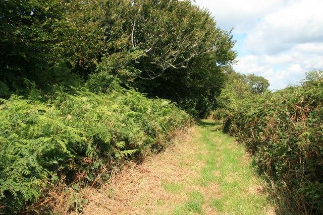 Footpath at Conegar Hill