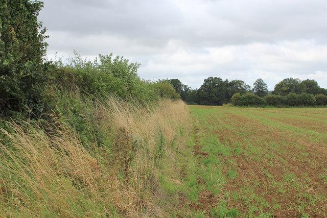 Field beside the Road to Kirkham