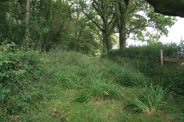 Woodland and path near Prime Coppices