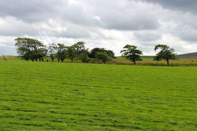 Pasture at Gorsebraehead