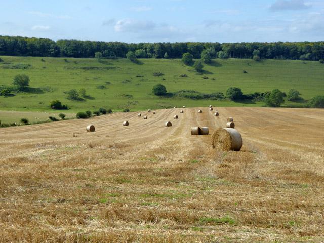 Harvested field above Charleston Bottom