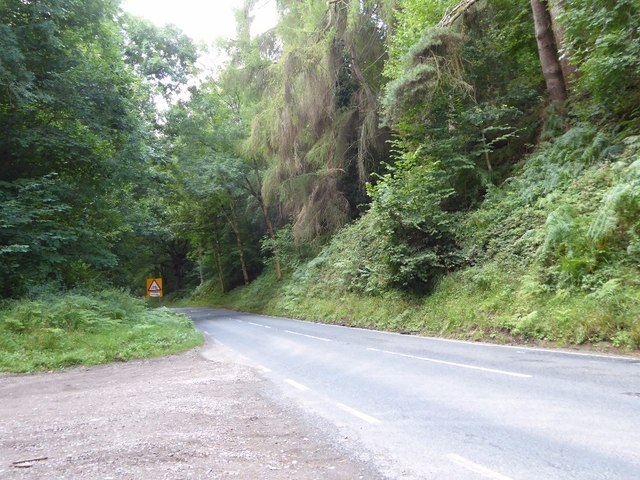 Road passing through Nagshead Plantation