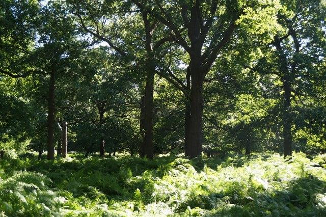 Woodland near the Ladderstile Gate, Richmond Park