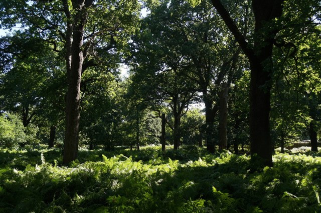 Woodland near Ladderstile Gate, Richmond Park