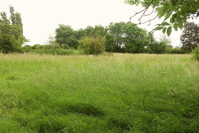 Field by Ilchester Road, Charlton Mackrell