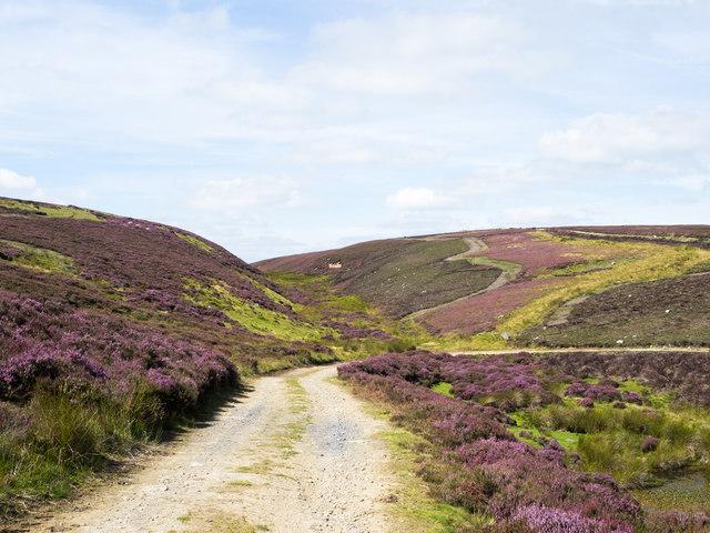 Valley of Lawsley Sike or Whapweasel Burn