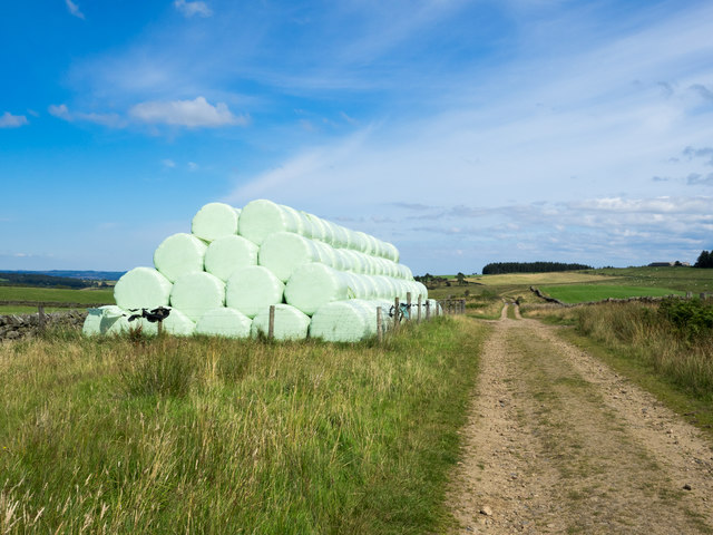 Silage bales beside farm and estate road