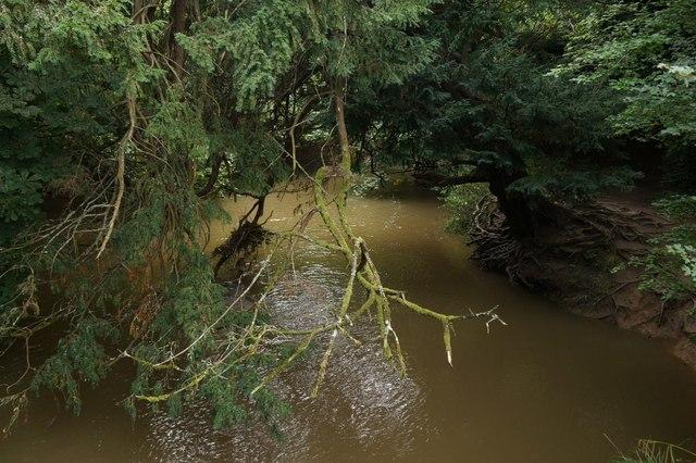 River Mole at Box Hill