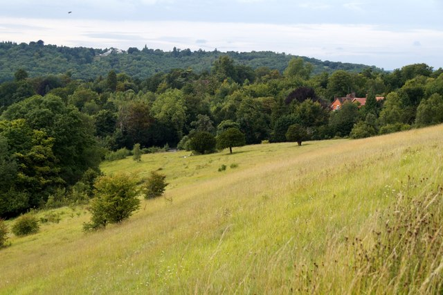 Downland on the NW slopes of Box Hill