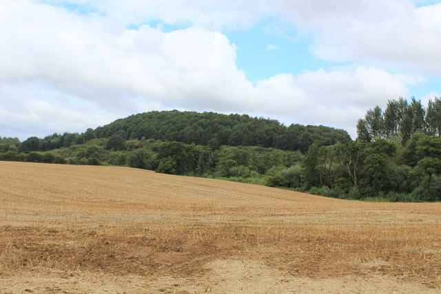 View to Huttons Bank Wood