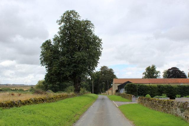 Menethorpe Lane approaching Menethorpe