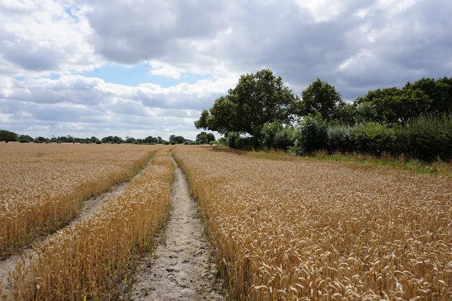 Path leading towards Osgodby