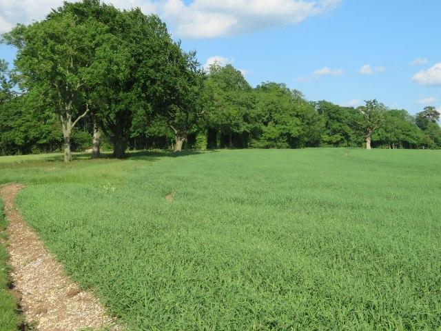 Field boundary - Oakley Park