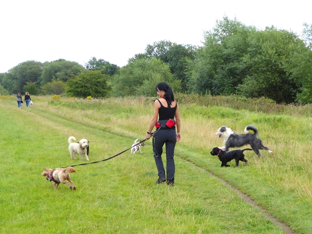 Dog walker by the River Tees