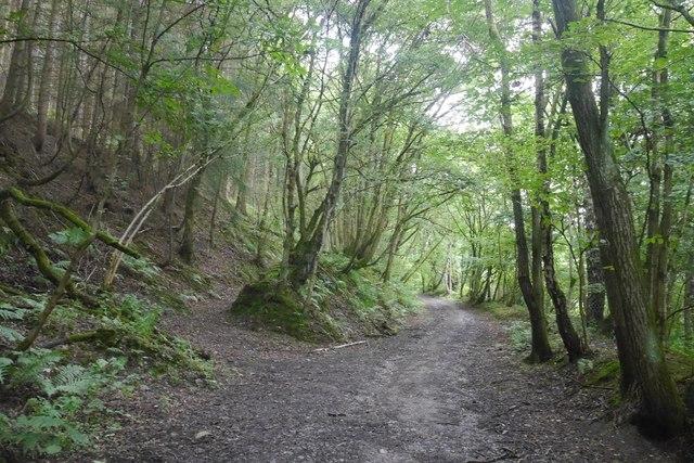 Path in a gully, Bucknell