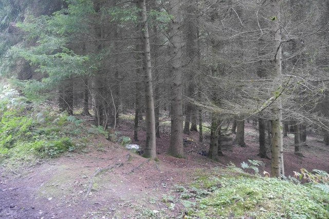 Conifer block, Bucknell Wood