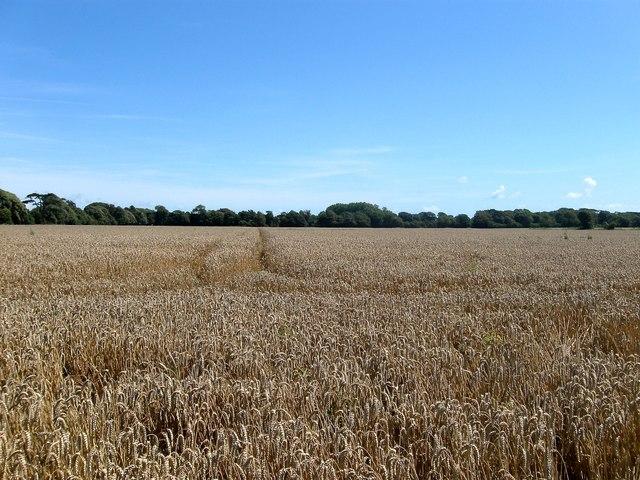Long Mead/Gun Field