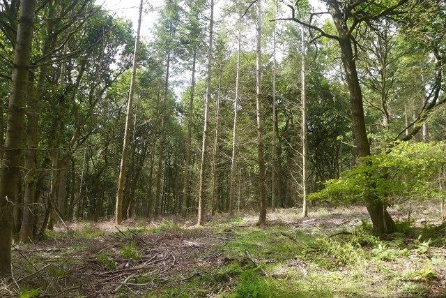 Mixed woodland, Bucknell