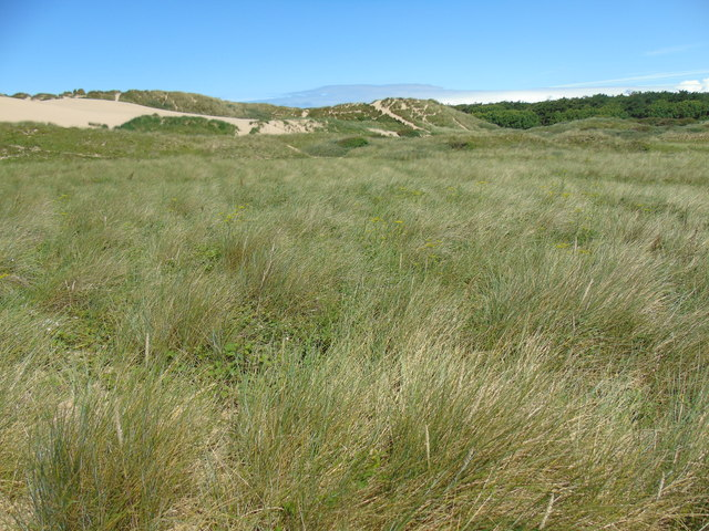 Grass and dunes at Formby Point