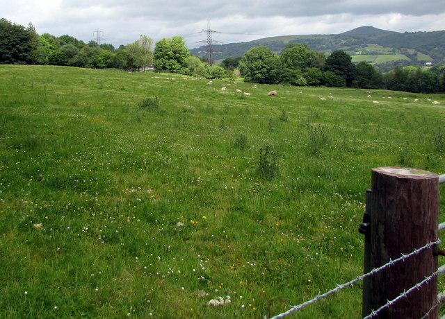 Grazing land, Llanfoist
