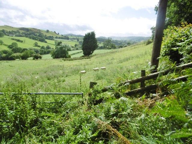 Llanrhaeadr-ym-Mochnant, sheep grazing