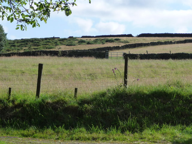Field boundaries near Cuckoostone House