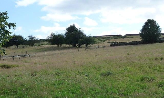 Farmland, west side of Cuckoostone Dale