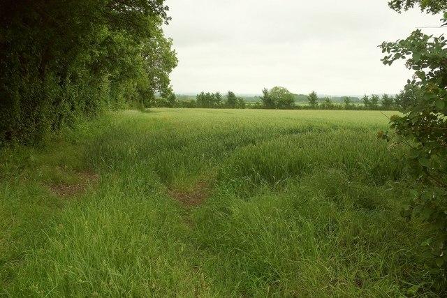 Field by Ridgeway Lane