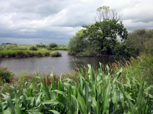 Pond on Tiverton Farm