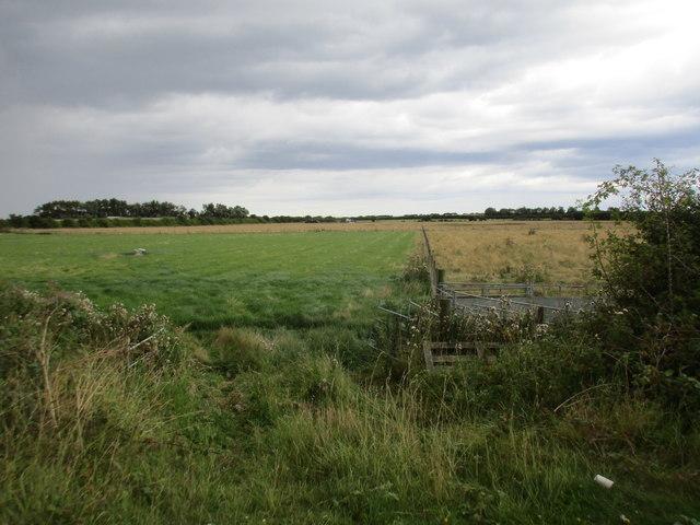 Grassland with sheep pen