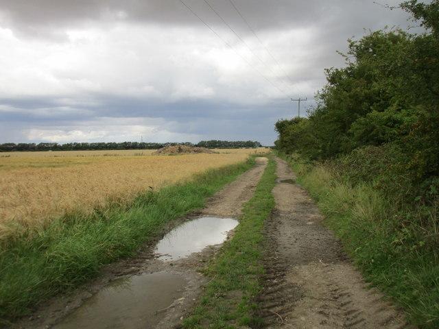 Mask Road