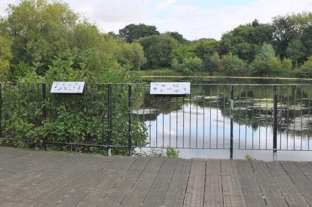 Pond in Figgate Burn Park