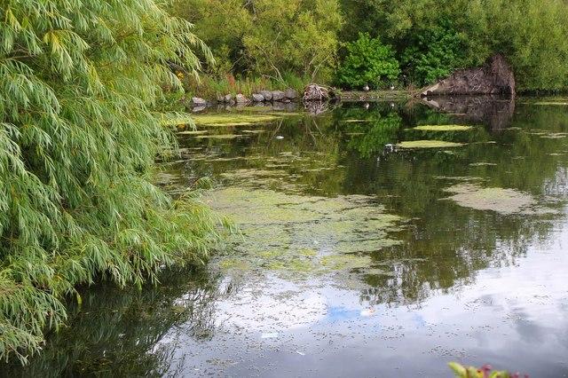 Pond in Figgate Burn Park (2)